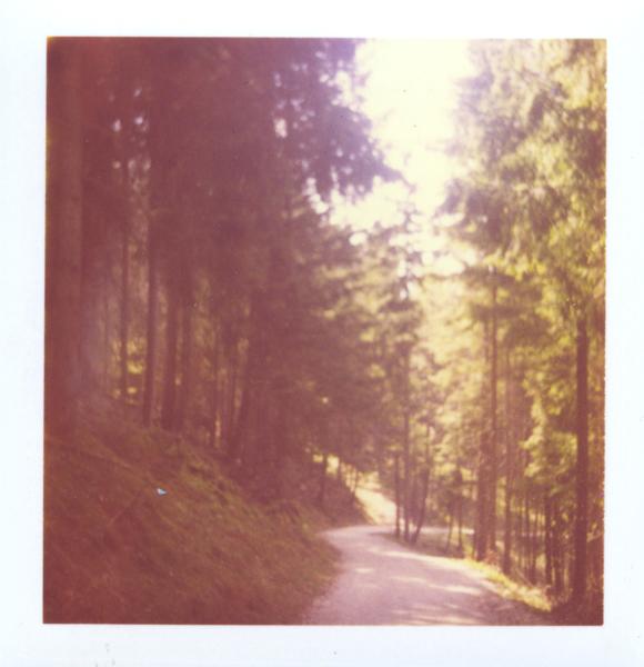 neuschwanstein_forest