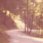 neuschwanstein_forest_btn