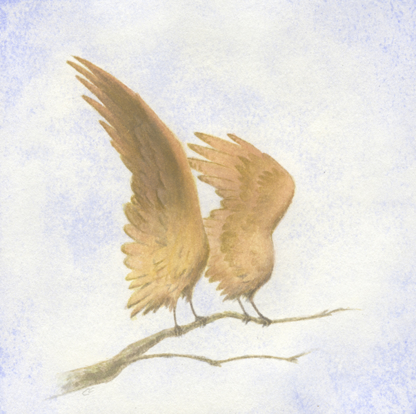 perched_wings