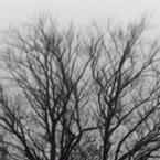 tree_in_field_btn